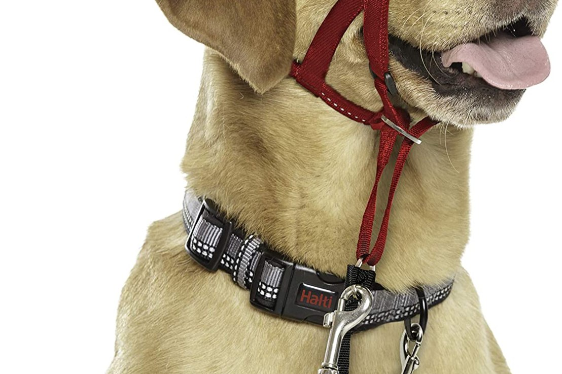 Company of Animals Halti Head Collar for Dogs, Size 2 and3
